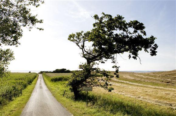 Natur på Langeland