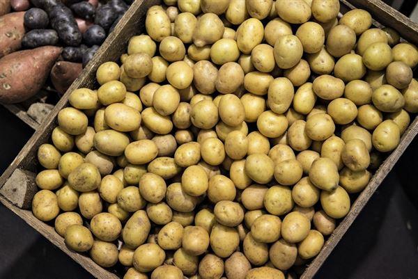 En kasse med rå kartofler