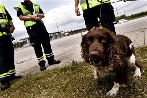 Toldere med narkohund ved den svensk-danske grænse