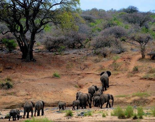 Elefanter Afrika Tanzania