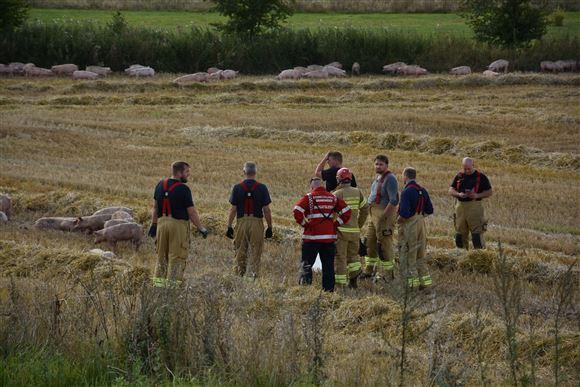 Læge politi og beredskab i kornmark