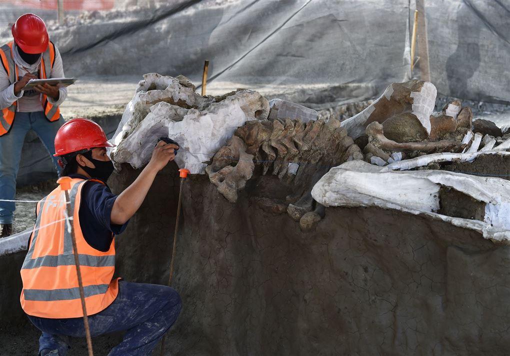 arkæologer arbejder med knoglerne