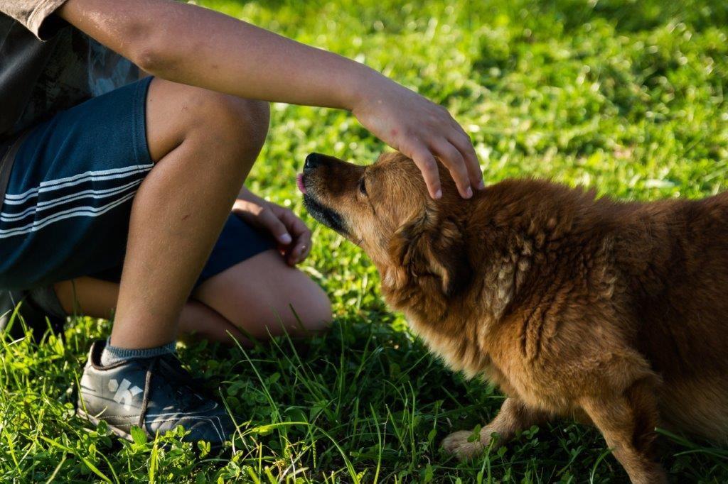Person kæler for hund
