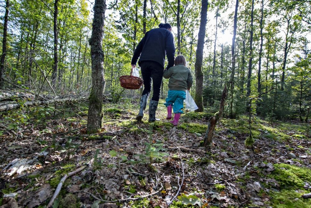 En far går med sit barn i hånden i en skov med en kurv i den anden hånd