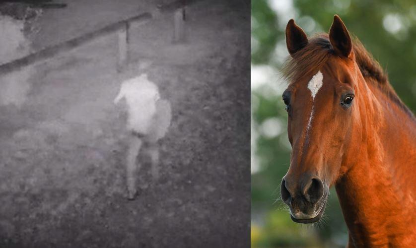 En hest og et grynet videobillede af en person om natten