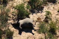 Død elefant set fra luften