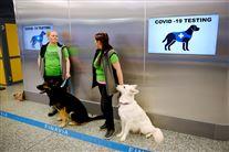 To hundefører står med deres hunde i lufthavnen i Helsinki. De to hundefører, som begge er kvinder, har grønne t-shirts på. De står ved nogle officielle skilte, der viser, at hundene tjekker for coronavirus.