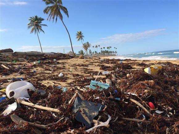 En palmestrand med blå himmel. Stranden er fuld af affald der er skyllet op fra havet
