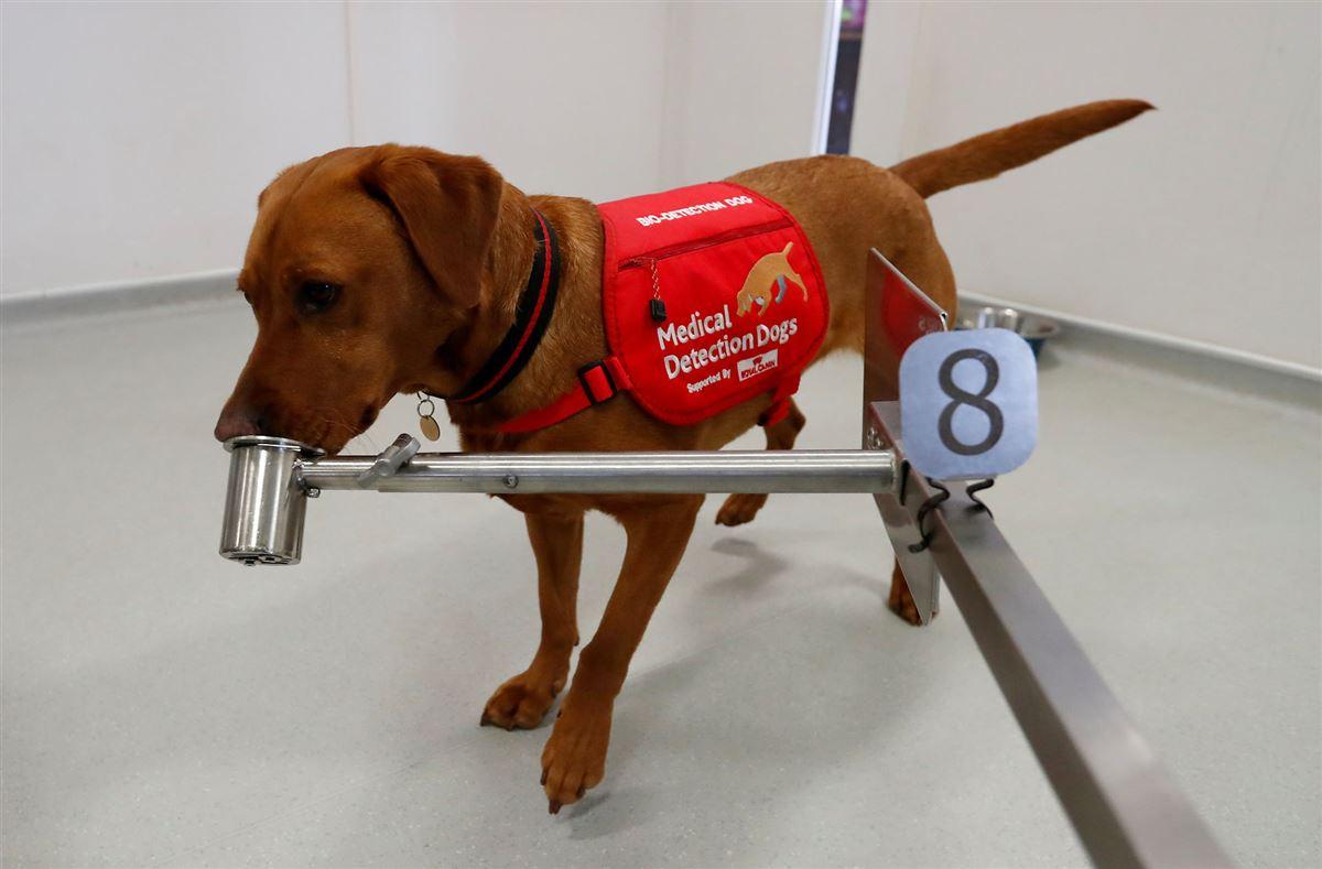En brun hund sniffer til en dåse, som kører på en karrusel med andre dåser på.