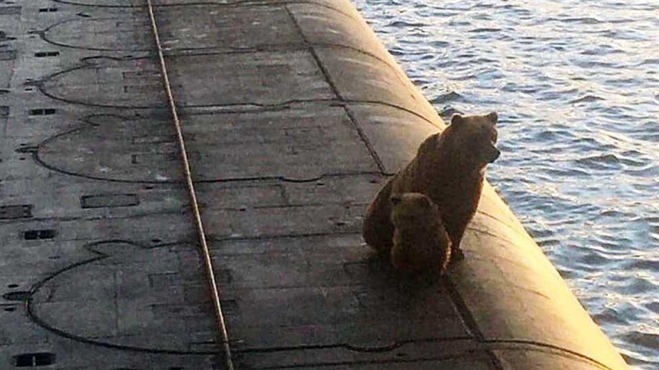 Bjørn med unge sidder på toppen af ubåd.