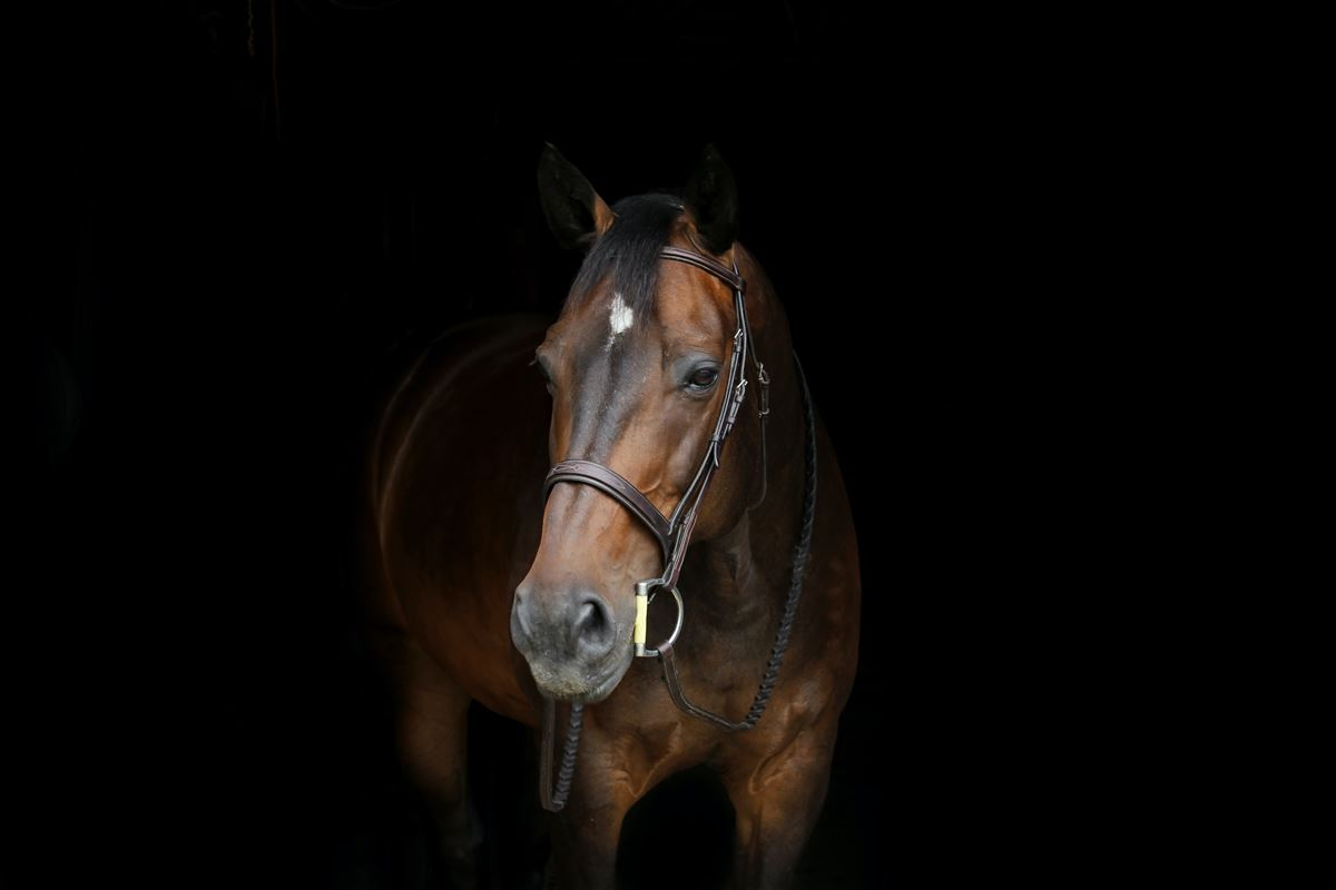 En brun hest står i mørke omgivelser.
