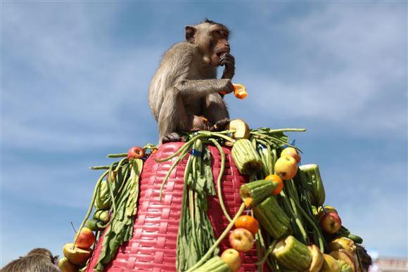 En abe sidder på toppen af et tårn ag forskellige grøntsager.