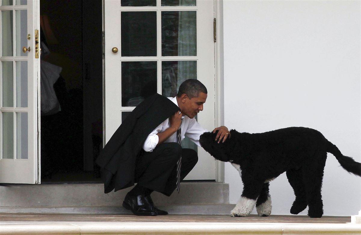 Obamama nusser en hund på trappen foran Det Hvide Hus