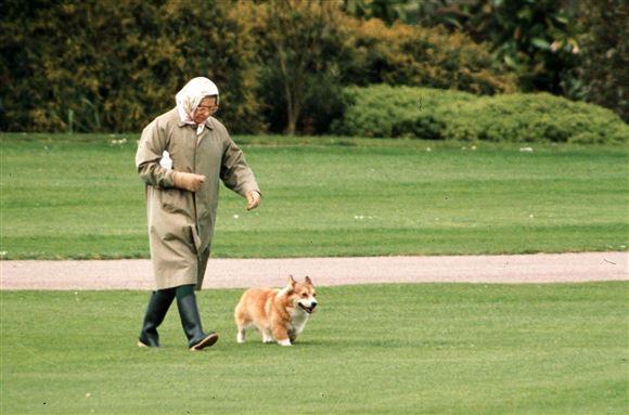Dronning Elizabeth går tur med en hund
