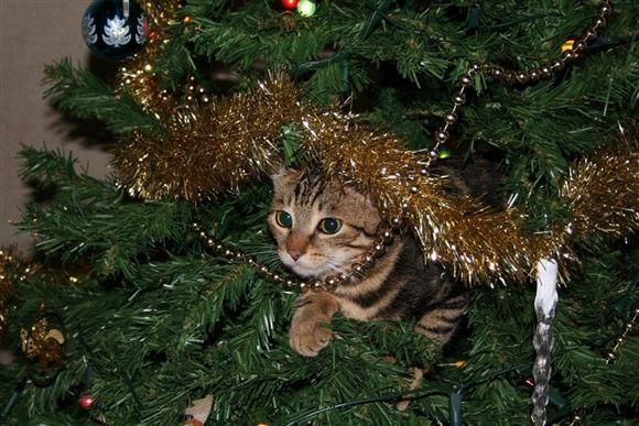 kat sidder i juletræ