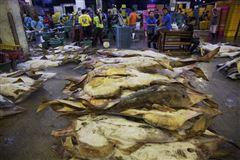 billede fra skalddyrsmarkedet