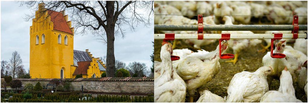 En kirke og nogle høns