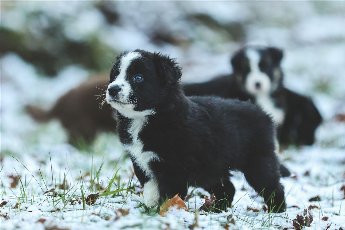 En hvalp i sneen