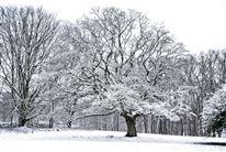 Snedækket landsskab