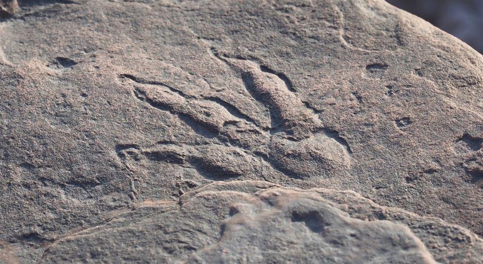 Et dinosauraftryk på en klippe