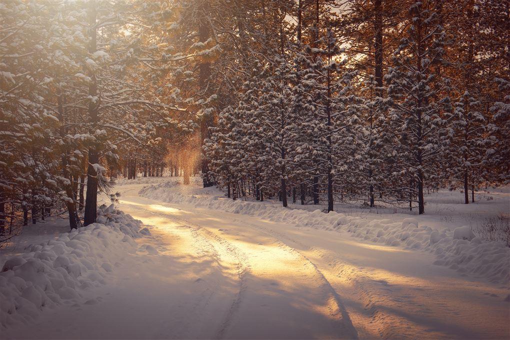 vinterlandskab i skov