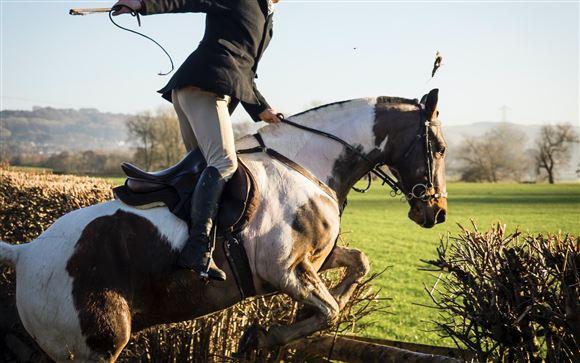 En rytter og en hest, som stejler
