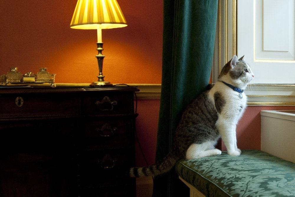 kat sidder og kigger
