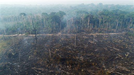 En udbrændt skov i Amazonas-junglen