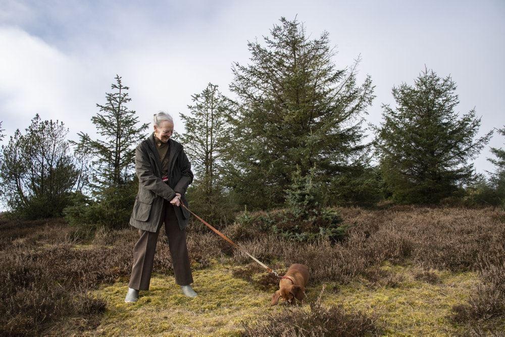 Dronningen er ude at lufte sin gravhund ved en skov.