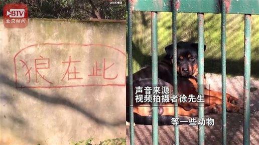 hund ligger i bur