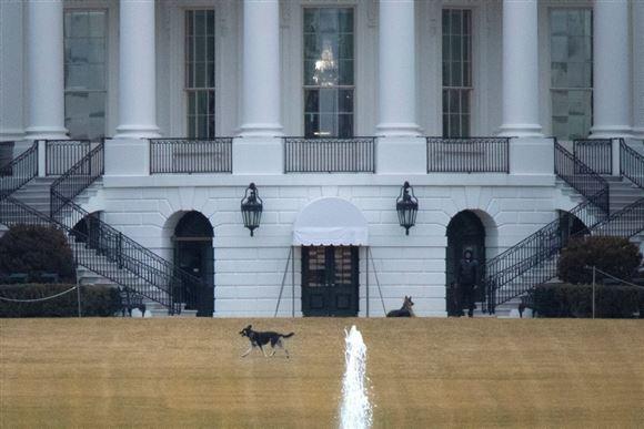 En schæferhund foran Det Hvide Hus