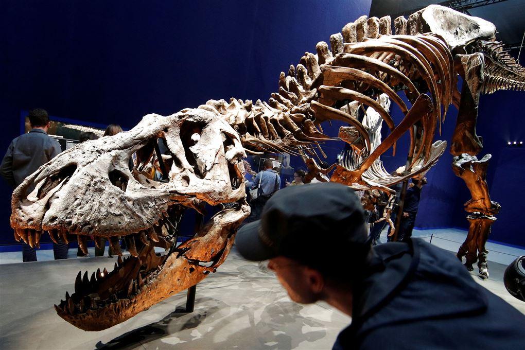 Et fossil af en T-Rex
