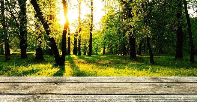 En træterrasse i en skov