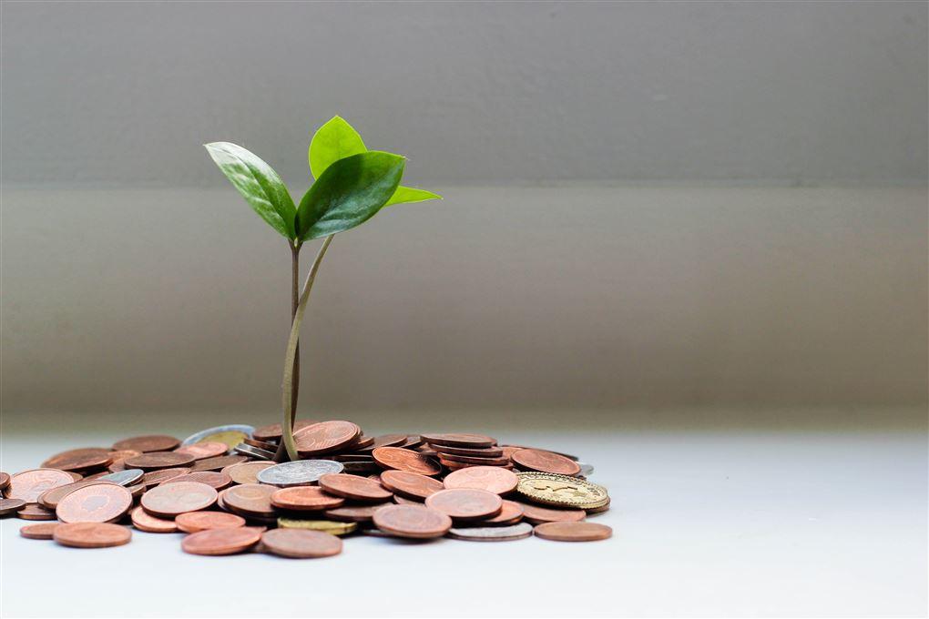 En plante gror op ad en masse mønter på et bord.