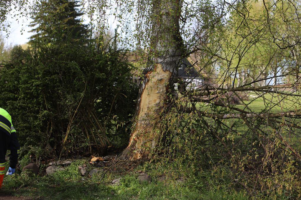 billede af det træ bilen ramte