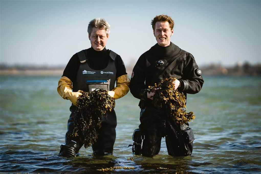 To mænd i waders i vandet med tang i favnenen