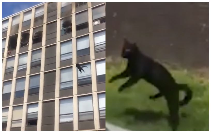 En kat i luften