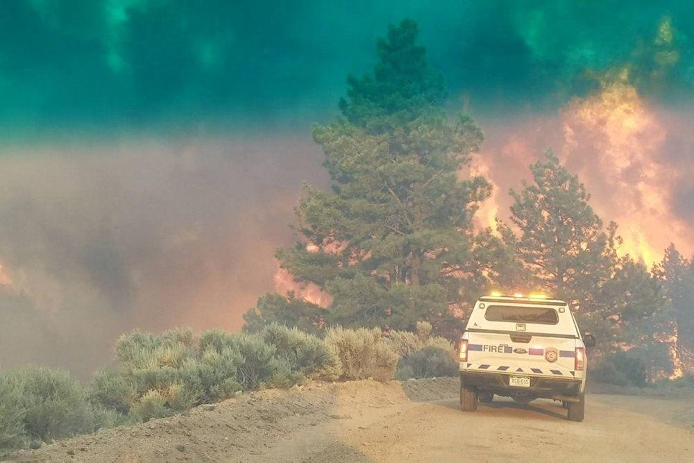 En skov i brand