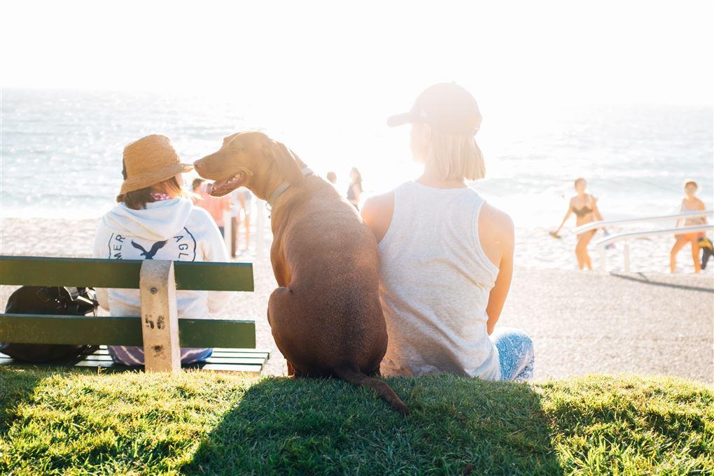 En hund på stranden med mennesker omkring