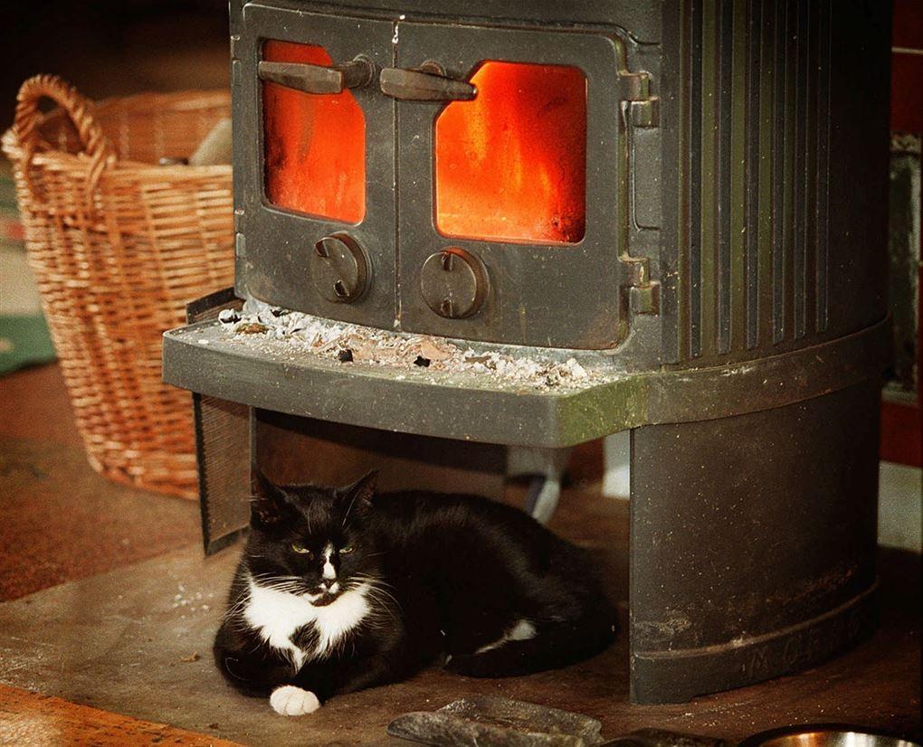 kat ligger under brændeovn