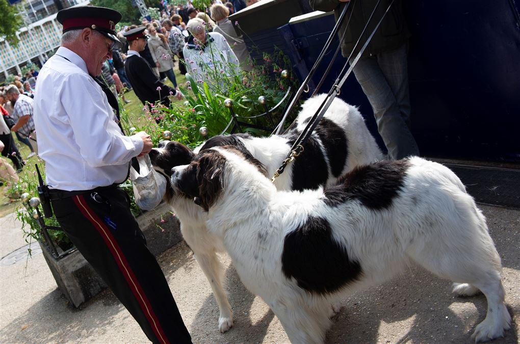 En kontrollør hygger sig med to hunde