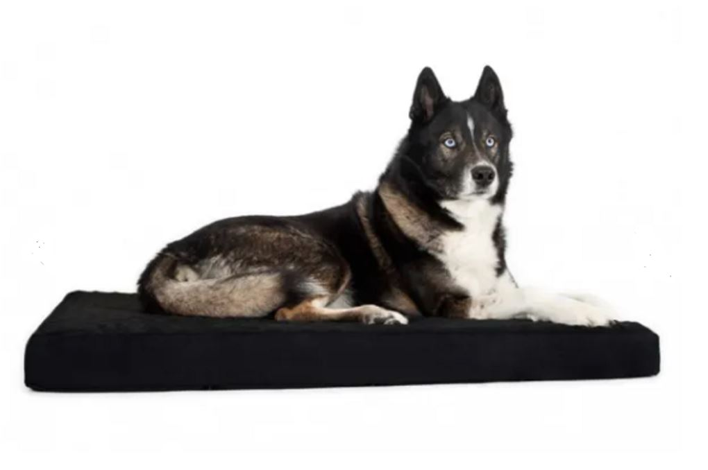 Schæfer hund på hundemadras