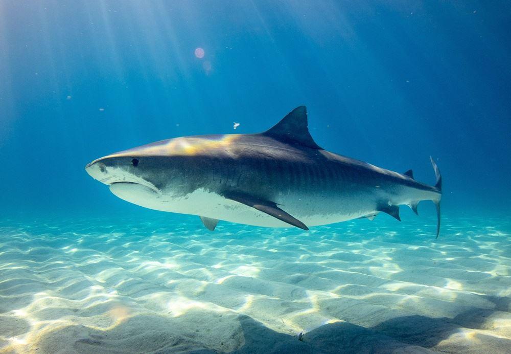 haj under vand