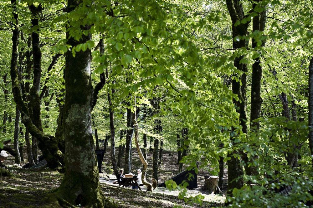 skovområde