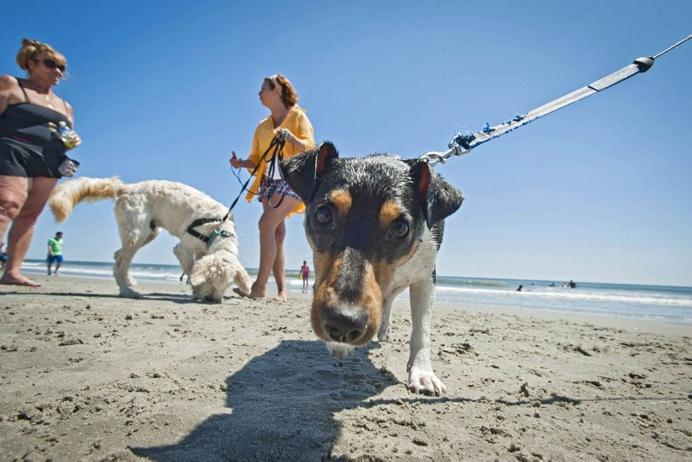 Hunde på en strand
