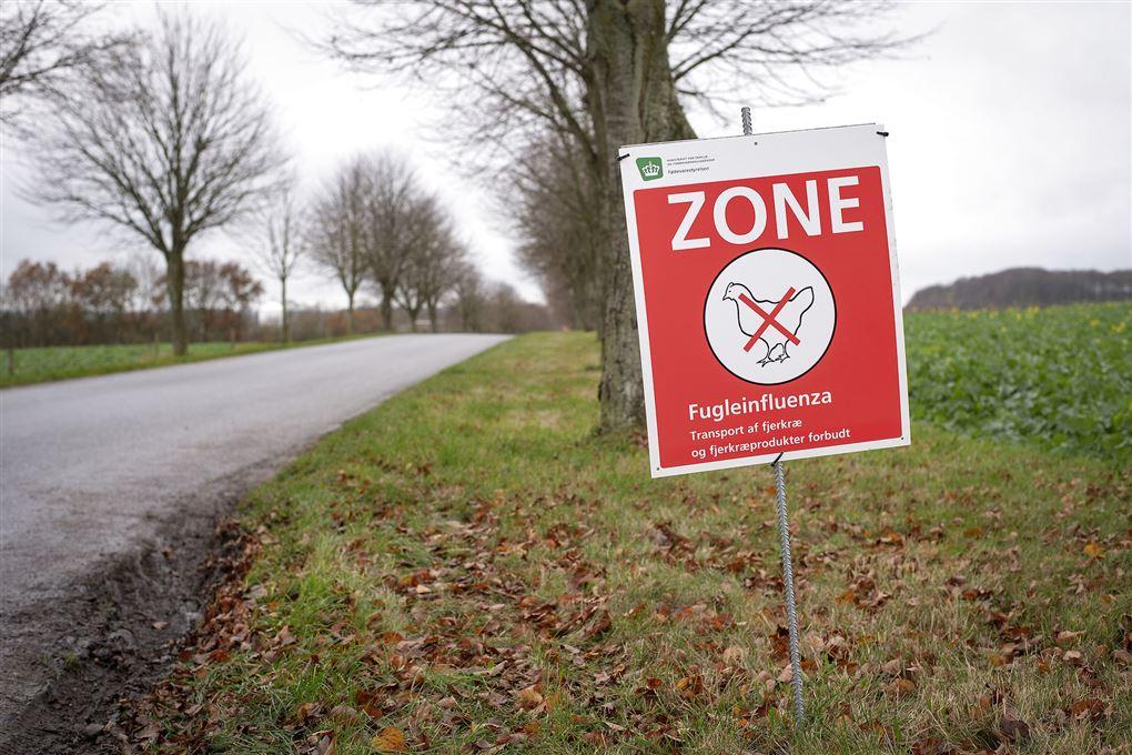 skilt om fugleinfluenza står ved vej